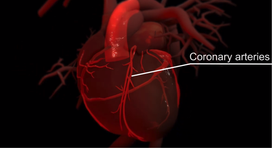 Functioning of heart explained through 3-D animation