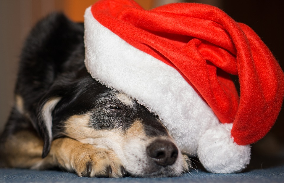 An image of a sleepy dog wearing a Santa hat. With the holidays over, it's time to work on your 2018 L&D strategy.