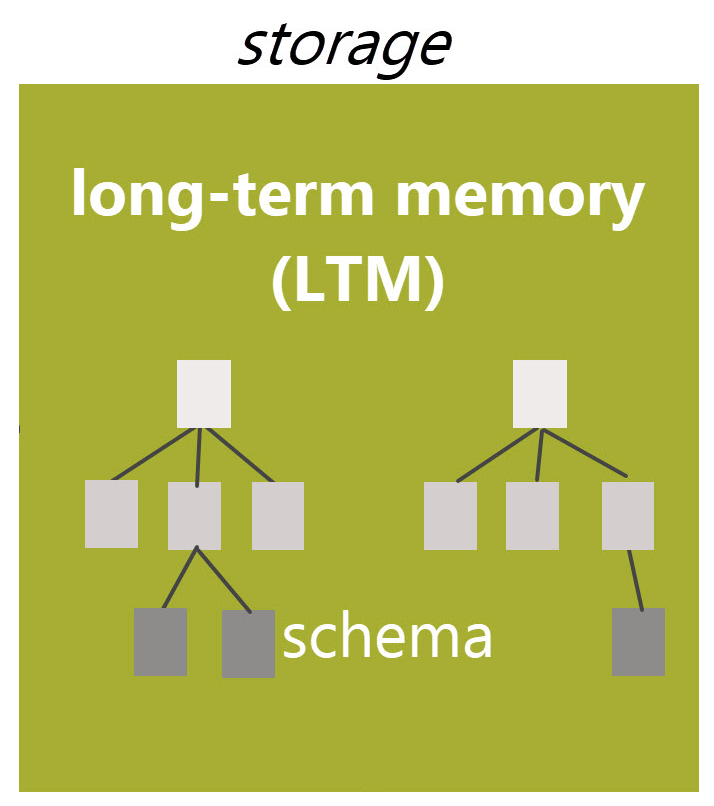 Long-term memory organizes related information into schema.